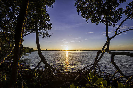 Mangrove Frame by Nick  Shirghio