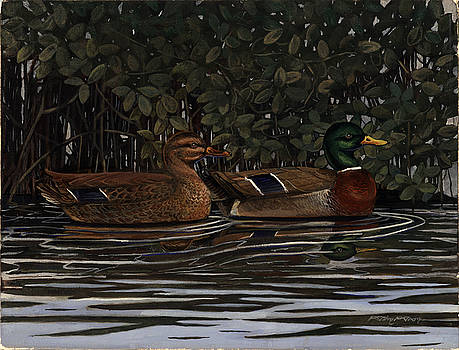 Mangrove Mallards by Timothy Tron