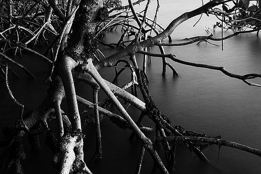Mangrove Roots by Marcus Adkins