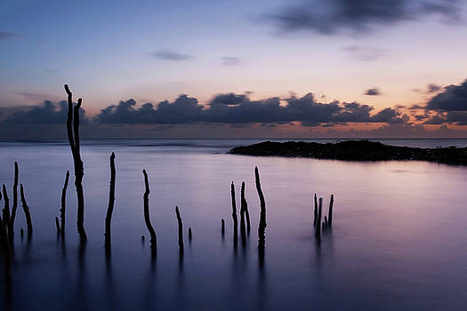 Mangrove Shoots at Dawn by Matt Tilghman