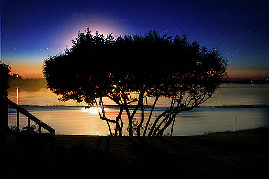 Mangrove sunset  by Eagle Finegan