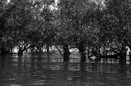 Mangroves by Arabesque Saraswathi