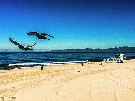 Julian Starks - Manhattan Beach Seagulls