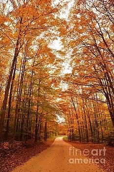 Terri Gostola - Manistee National Forest Hideaway