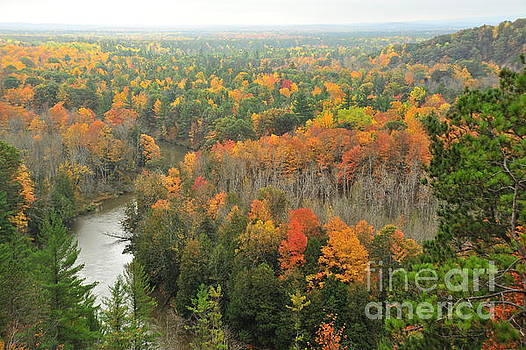 Terri Gostola - Manistee River Autumn Forests