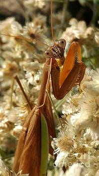 Mantis pose by J L Zarek