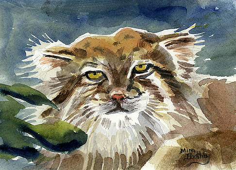 Manul by Mimi Boothby