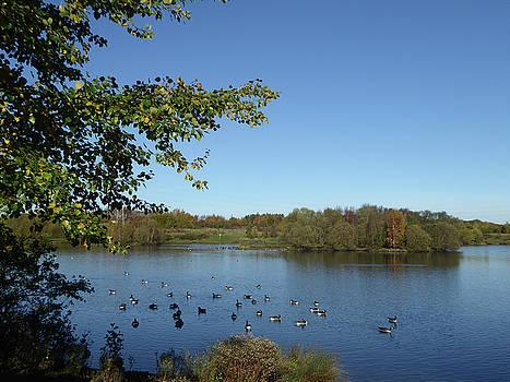 Manvers Lake 3 by Carol Lynch
