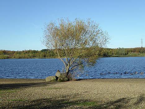 Manvers Lake 5 by Carol Lynch