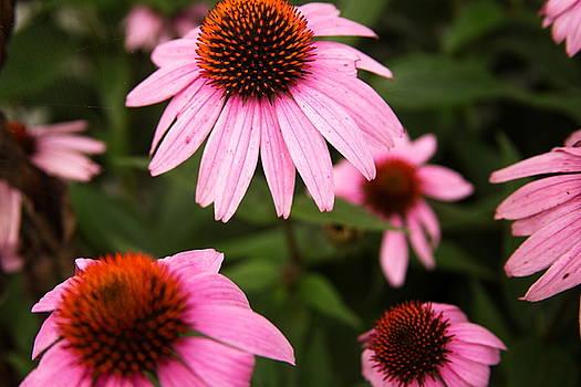 Many Flowers by Amanda Kiplinger