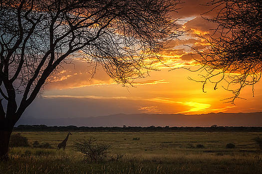 Sylvia J Zarco - Manyara Ranch Sunset