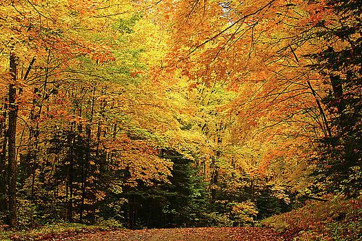 Maple Blaze by Bill Morgenstern