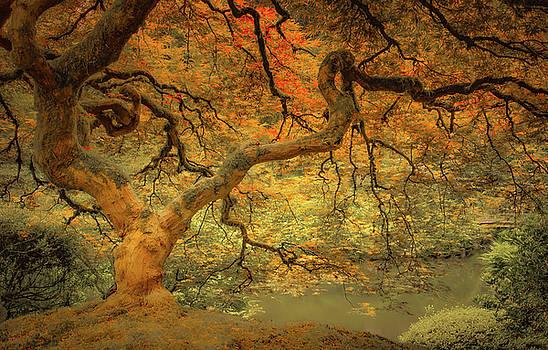 Maple Brilliance by Don Schwartz