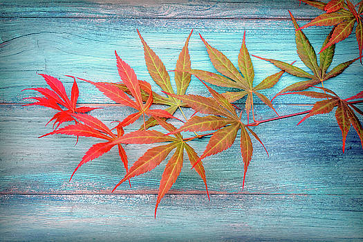 Maple Colors by Philippe Sainte-Laudy