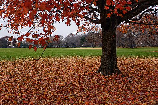 Maple Droppings by Cornelis Verwaal