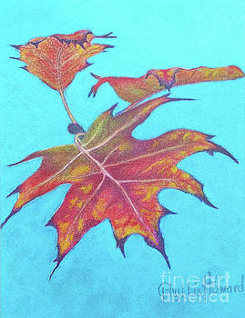 Drifting into Fall by Phyllis Howard