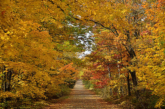 Maple Lane by Whispering Feather Gallery