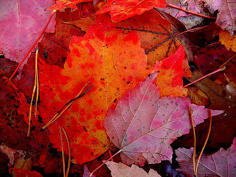 Maple Leaves by Don Whipple