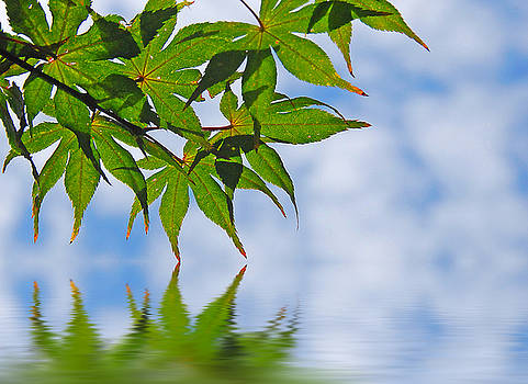 Maple Leaves Over Water by Cheryl Casey
