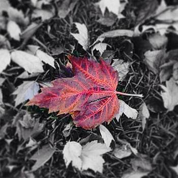 Fallen Leaves by Sharon Halteman