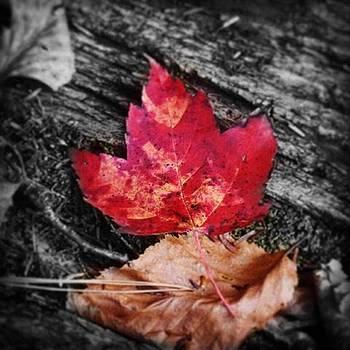 Shades Of Autumn by Sharon Halteman