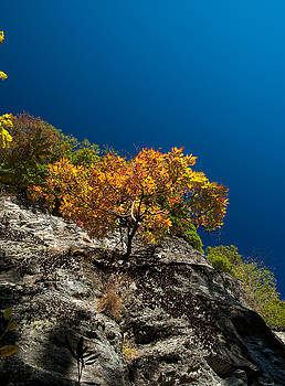 Maple on blue. by Itai Minovitz