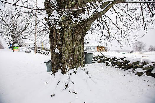 Maple Sugar Season by Robert Clifford