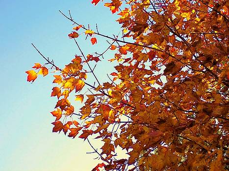 Maple Tree in October by Lisa Gilliam