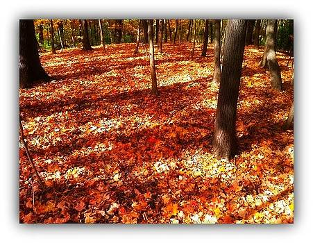 Maples by Priyadharsini Jagadeesan