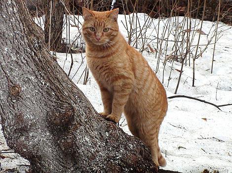 March cat by Sergey Lukashin