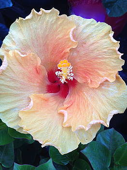 March Hibiscus by Steve Martinez