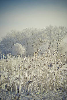 March morning by Evgeniy Ovchinnikov
