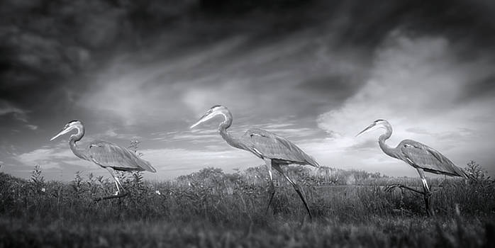 March of the Great Blue Herons  Vol 2 by Mark Andrew Thomas