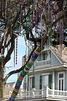 Mardi Gras in the Trees by Sarah Stollberg