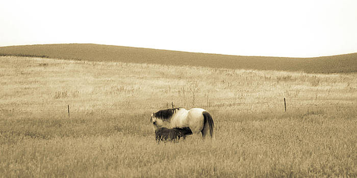 Mare and Foal  by Dawn Romine