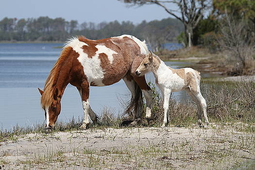 Mare and Foal by Stacey Steinberg
