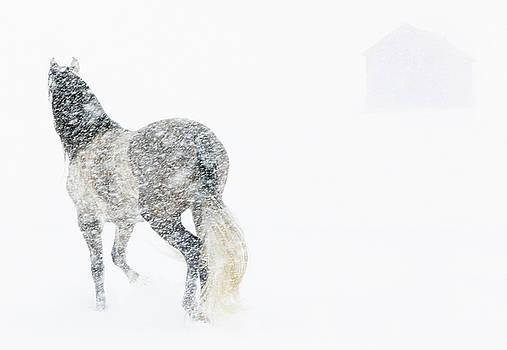 Mare in a Blizzard II by Carol Walker