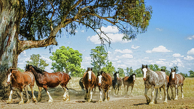 Mares in Waiting  by Kathryn Potempski