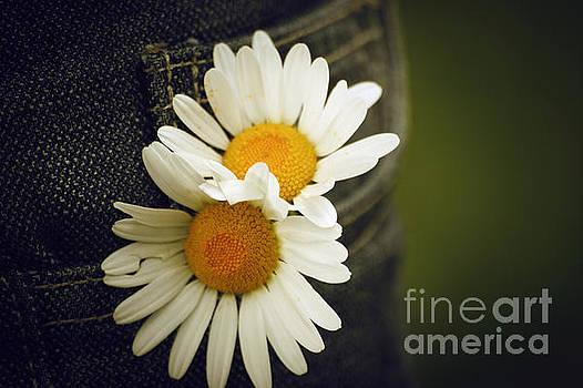 Margarite flowers by Dimitar Hristov