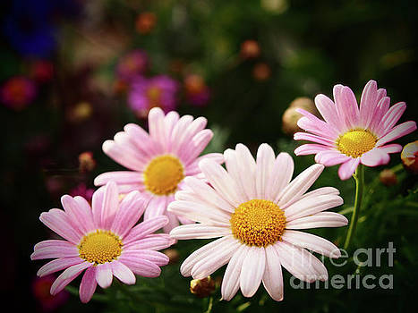 Marguerite In The Garden Shadows by Dorothy Lee