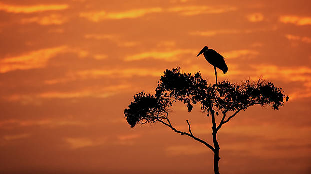Susan Schmitz - Maribou Stork on Tree With Orange Sunrise Sky