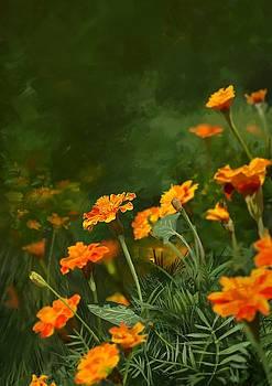 Marigold by Konstantin Kolev