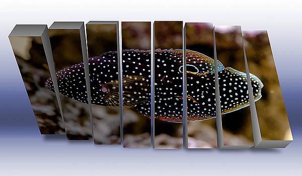 Marin Betta Saltwater Fish by Marvin Blaine