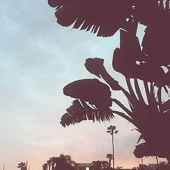 Marina Sunrise by Cortney Herron