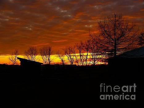 Marmalade Sky by Donald C Morgan