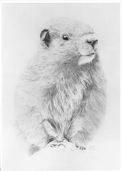 Marmot by Glen Frear