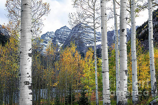 Maroon Bells - The Aspen View by The Forests Edge Photography - Diane Sandoval