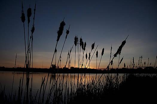 Marsh Cotton Sunset by Leo Bello