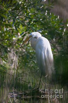 Dale Powell - Marsh Egret