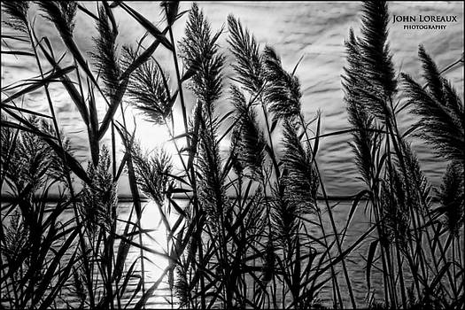 Marsh Grass bw by John Loreaux